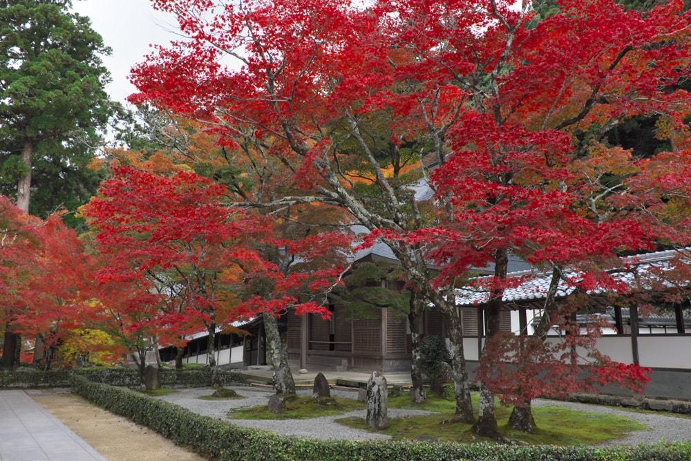 開山御手植の楓樹(かいさんおてうえ の ふうじゅ)
